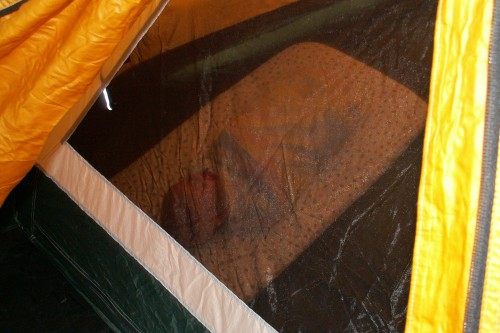 Napping like a burrito in the tent.