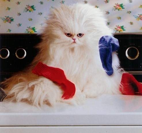 Templeofcats.com